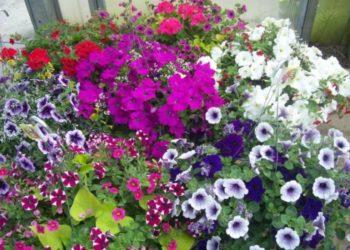 Grassmid Greenhouse-Hanging Basket